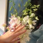 Golden Rose 340_f3