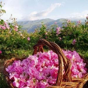 i-profumi-di-firenze-rosa-di-damasco