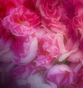 Dorin - Dorin D'or Rose De Taif